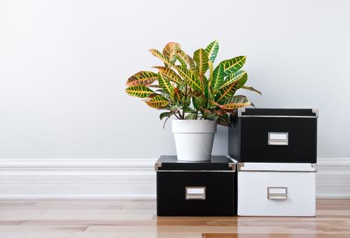 organize-tips
