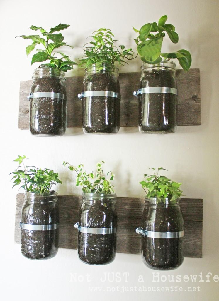 Indoor Herb Garden in Mason Jar Planters