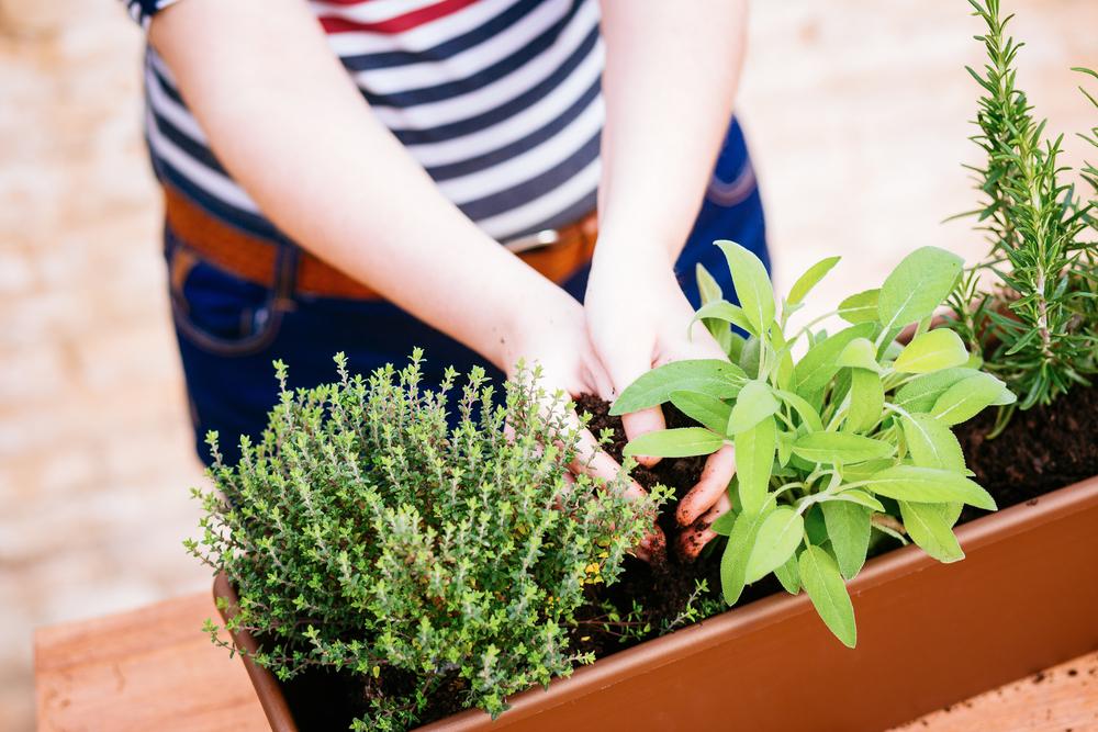 Balcony Gardening Guide