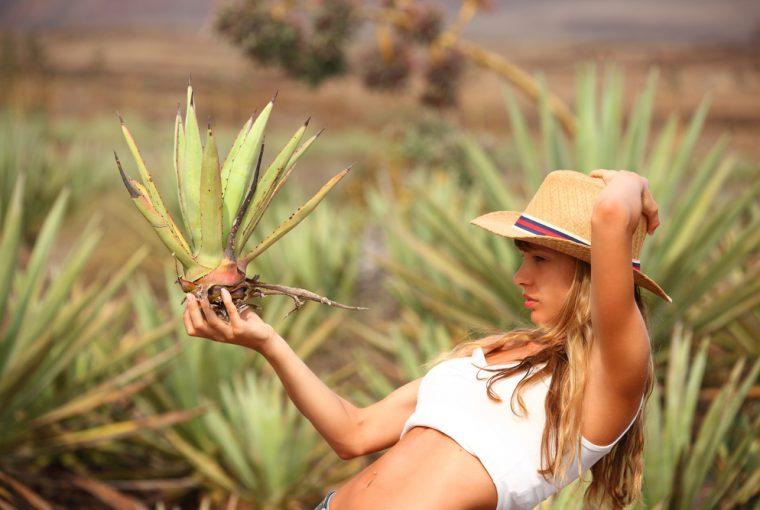 Healthy Living: 4 Benefits of Aloe | Loren's World