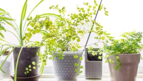 plants, 4 Plants That Don't Need Sunshine. sunshine, house plants, at-home plants